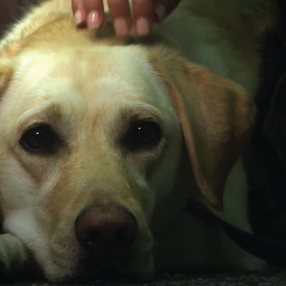 Courthouse Dog documentary